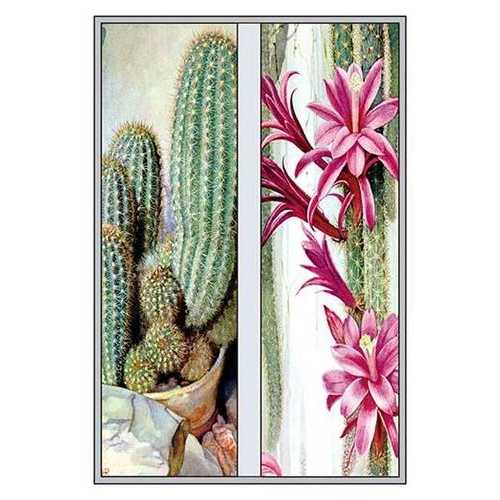 Cactus and Flower (Paper Poster)
