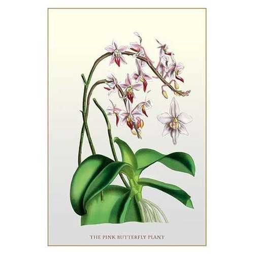 The Pink Butterfly Plant (Paper Poster)