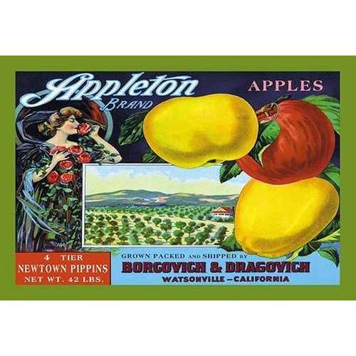 Appleton Brand Apples (Paper Poster)
