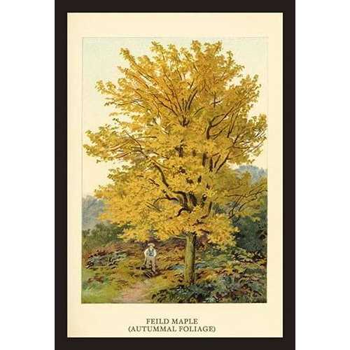 Field Maple (Paper Poster)