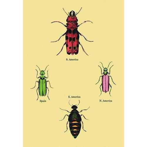 Beetles from North and South America and Spain #2 (Canvas Art)