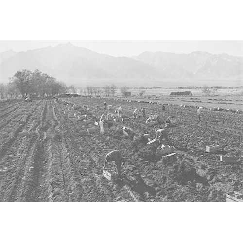 Potato Fields (Fine Art Giclee)