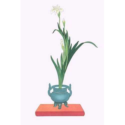 Ichihatsu (Iris Tectorum) in three legged isubo (Paper Poster)