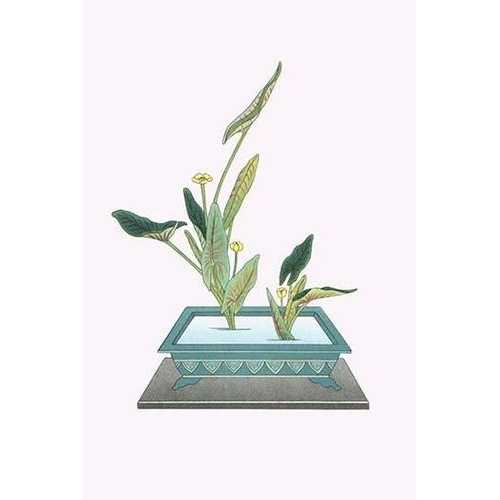 Kohone (Water Lily) in a Sunabachi (Framed Poster)