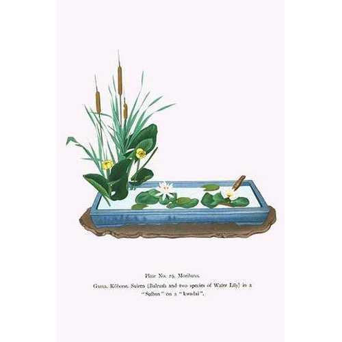 Gama, Kohone & Suiren (Bulrush & Water Lilies) in a Suiban (Fine Art Giclee)