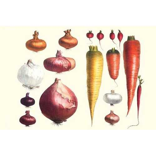 Onions Carrots & Turnips (Paper Poster)