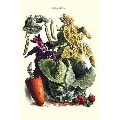 Vegetables; Cabbage, peas, strawberries, and carrot (Paper Poster)