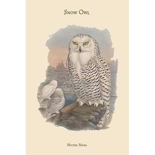Nyctea Nivea - Snow Owl (Canvas Art)