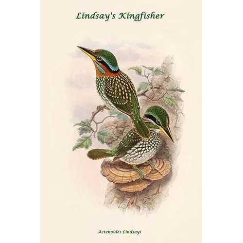 Actenoides Lindsayi - Lindsay's Kingfisher (Canvas Art)