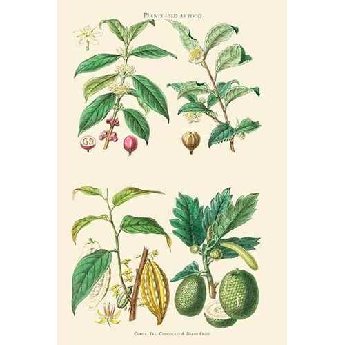 Plants Unused as food. Coffee, Tea, Chocolate, Breadfruit (Paper Poster)