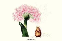 Amaryllis (Paper Poster)