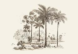 Palm Trees (Canvas Art)