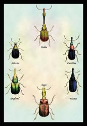 Beetles From Around the World #1 (Fine Art Giclee)