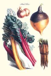 Vegetables; rhubard, carrot, onion, turnip (Paper Poster)