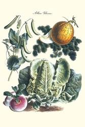 Vegetables; Melon, Lettuce, Green Beans, and Turnips (Paper Poster)