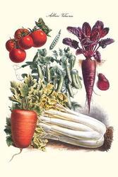 Vegetables; Carrot, Beet, Tomato, & Celery (Framed Poster)