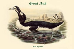 Alca Impennis - Great Auk (Canvas Art)