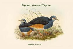 Eutrygon Terrestries - Papuan Ground-Pigeon (Paper Poster)