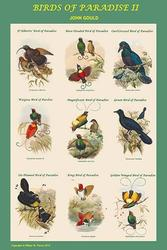 Birds of Paradise Composite II Vertical Classroom Poster (Canvas Art)