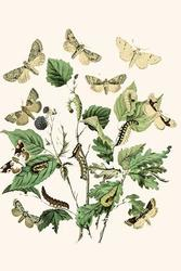 European Butterflies & Moths (Framed Poster)
