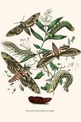 European Butterflies & Moths (Fine Art Giclee)