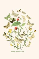 European Butterflies & Moths (Framed Poster)