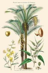 Plants Used in Clothing and Cordage. Gomuti Palm, Piassava Palm, Sunn Hemp, Jute (Paper Poster)