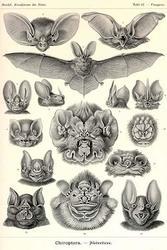 Bats (Fine Art Giclee)